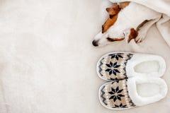 Собака близко к тапочкам под половиком стоковые изображения rf