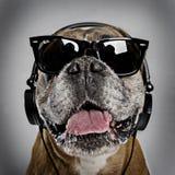 собака боксера холодная Стоковое фото RF