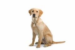 собака большая Стоковые Изображения