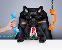Собака босса работника офиса Стоковое Изображение RF