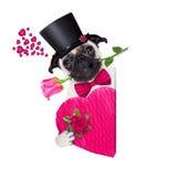 Собака больного влюбленности валентинок Стоковое Изображение RF