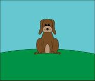 Собака Брайна на холме Стоковое фото RF