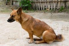 Собака Брайна сидя на поле стоковые изображения