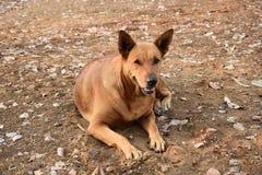 Собака Брайна сидя на спортивной площадке Стоковое Фото