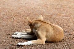 Собака Брайна спать на поле с видит заднюю часть, собаку милую стоковые изображения