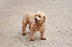 Собака Брайна стоковые изображения