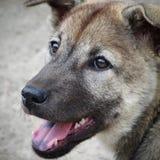Собака (близкие поднимающие вверх) Стоковая Фотография