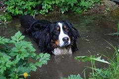собака ванны Стоковые Изображения