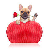 Собака валентинок Стоковые Фотографии RF
