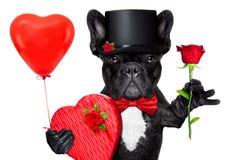 Собака валентинок Стоковые Фото