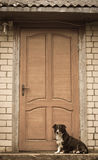 собака верная Стоковые Фотографии RF