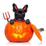 Собака ведьмы тыквы хеллоуина Стоковые Изображения RF