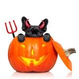 Собака ведьмы тыквы хеллоуина Стоковая Фотография RF