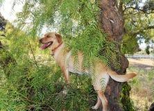 Собака взбирается дерево Стоковые Изображения