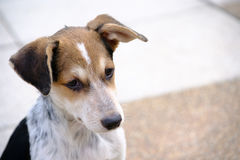 Собака взгляда лицевой стороны бездомных помех собаки на городской дороге Стоковая Фотография RF