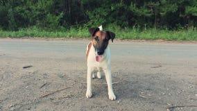Собака двигает ОН назад 4 сток-видео