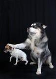 собака вниз сидит Стоковое Изображение
