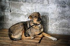 Собака внутри клетки в укрытии Стоковые Изображения