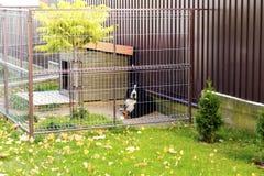 Собака вокруг будочки Стоковое Изображение