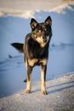Собака двора Стоковые Фотографии RF