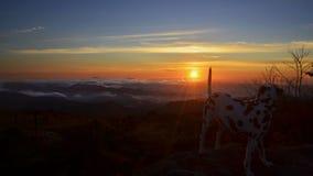 Собака восхищая восход солнца в горах стоковая фотография rf