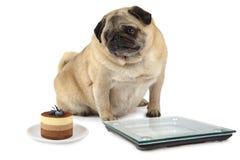Собака выбирает между тортом и диетой Стоковые Фото