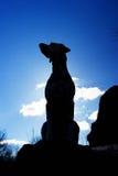 Собака выглядеть как статуя в заднем свете Стоковые Изображения RF