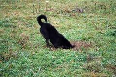 Собака выкапывает вне отверстие мыши Стоковая Фотография RF