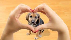 собака выслеживает влюбленность 2 стоковая фотография
