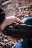 собака выслеживает влюбленность 2 Стоковые Фотографии RF