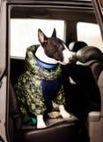 Собака в автомобиле Стоковые Фото