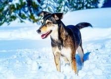 Собака в ландшафте зимы горы детеныши профиля портрета предпосылки изолированные парами белые Стоковое Фото