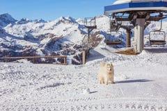 Собака в Альпах Стоковая Фотография