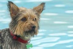 Собака в бассейне стоковое изображение