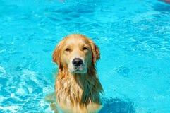 Собака в бассейне стоковое изображение rf