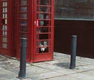 Собака в будочке телефона красной стоковые фотографии rf