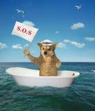 Собака в ванне на море стоковое фото rf