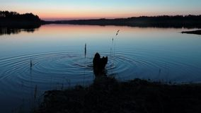 Собака в воде на заходе солнца
