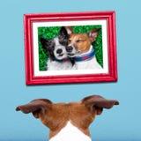 Собака в влюбленности Стоковое фото RF