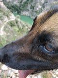 Собака в горах стоковое фото rf