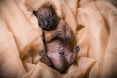 Собака в городе Городской портрет собаки Стоковая Фотография