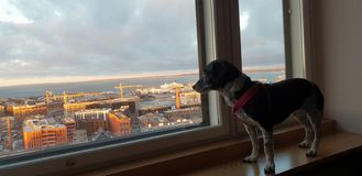 Собака в гостинице стоковые изображения