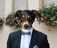 Собака в деловом костюме с предпосылкой n цветков стоковое фото rf