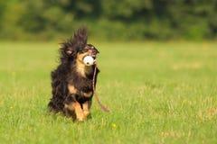 Собака в действии Стоковые Фотографии RF