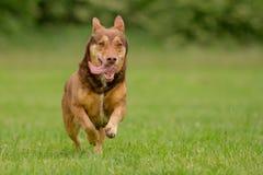 Собака в действии Стоковая Фотография