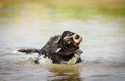 Собака в действии Стоковое Изображение