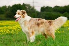 Собака в действии Стоковые Изображения RF