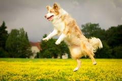 Собака в действии Стоковые Фото