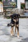 Собака в деревне на треке базового лагеря Annapurna, Непале Стоковое фото RF