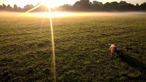 Собака в заходе солнца Стоковые Фото